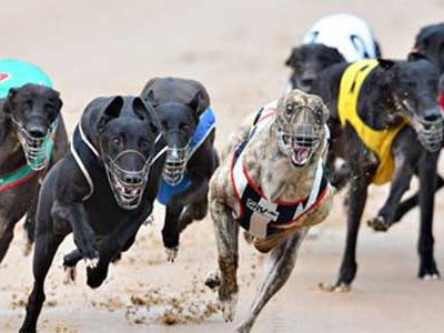 Aussie greyhound racing
