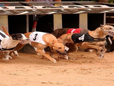 picture of greyhounds racing